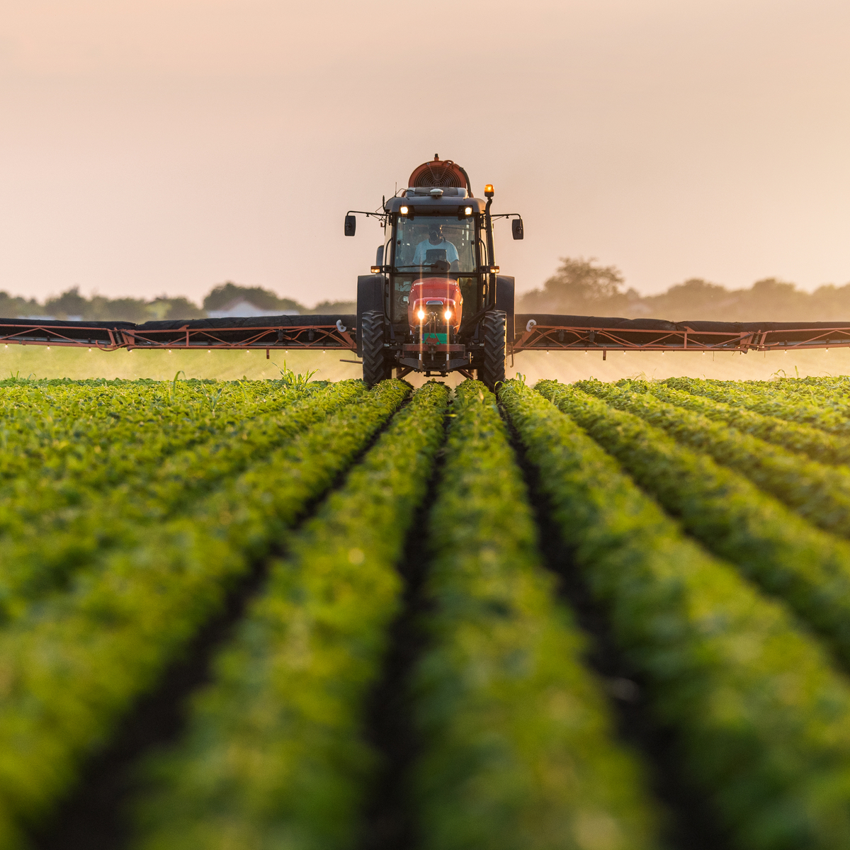 Sustainable Agriculture vs. Industrial Agriculture   FoodPrint